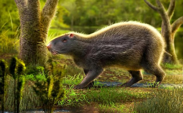 The vast rodent roamed the Amazon. (SWNS)