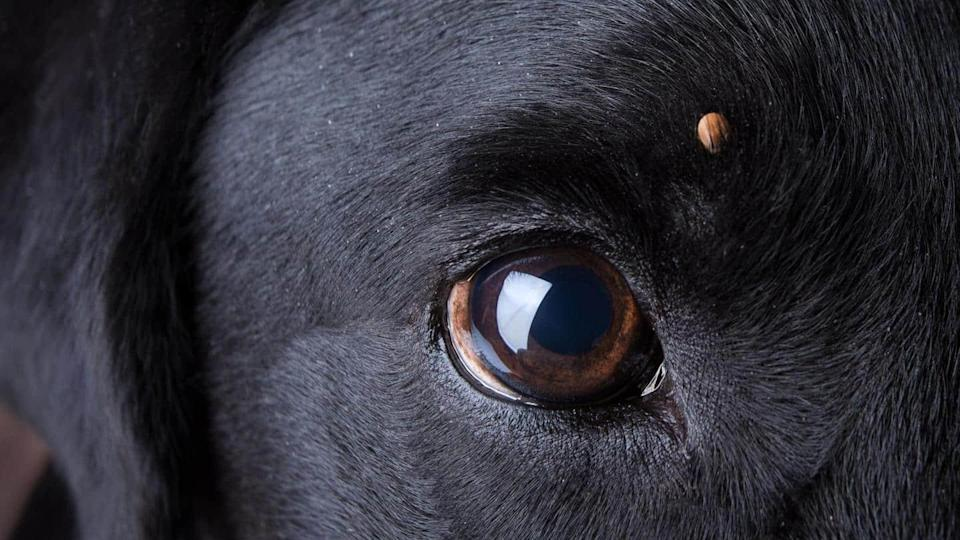What to do in case your dog has ticks?
