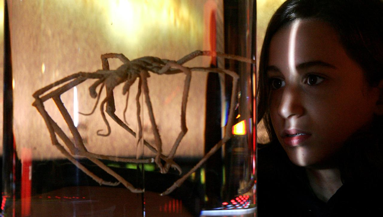 A young girl views an exhibition of a sea spider during a press viewing of The Science Of Aliens at the Science Museum in west London, Thursday, Oct, 13, 2005. The exhibition made up of over 500 exhibits, explores humanity's emotional attachment to the search for alien life. The exhibition opens for public viewing on Saturday, Oct, 15, 2005. (AP Photo/Sergio Dionisio)