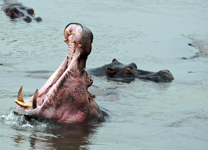 In the last decade, 25 fishermen have been mauled to death in the giant jaws of hippos and many more injured in the waters of Gouloumbou in eastern Senegal, village officials say