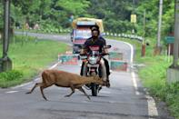 A wild deer crosses a National Highway in search for safer places at the flood affected area of Kaziranga National Park in Nagaon District of Assam. (Anuwar Ali Hazarika/Barcroft Media via Getty Images)