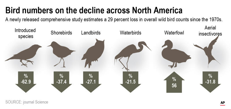 A new study finds there are nearly 3 billion fewer wild birds flying in North American skies than in 1970.;