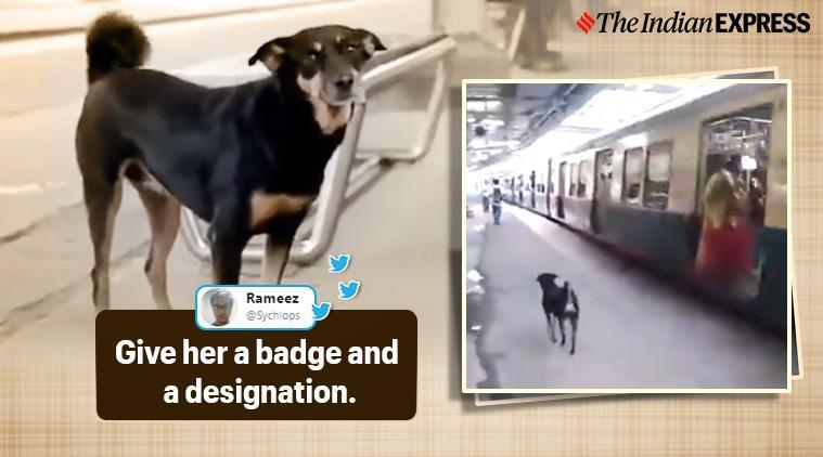 Abandoned dog joins Railway Protection Force officials to warn passengers who don't follow railways rules, Railway Protection Force, Chennai, Park Town, MRTS station, Trending, Indian express news
