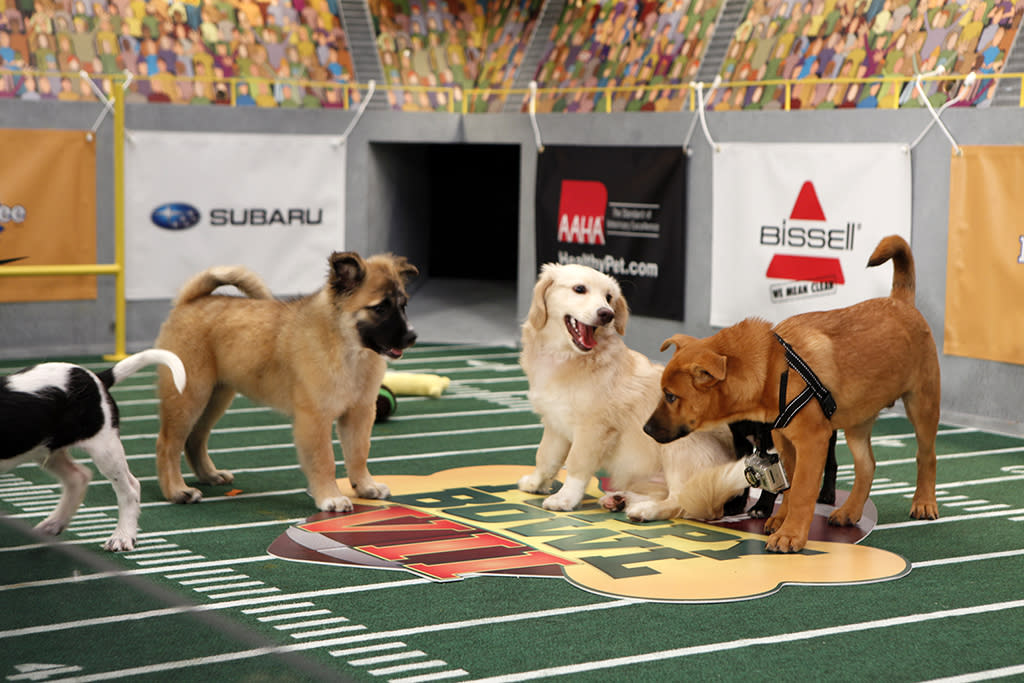Puppy Bowl VIII - 3 pm to 5 pm EST – Animal Planet