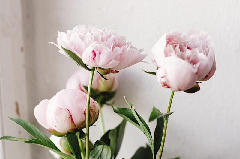 Frothy, fragrant peonies are incredibly popular in the UK during the spring and summer months. (Getty Images)