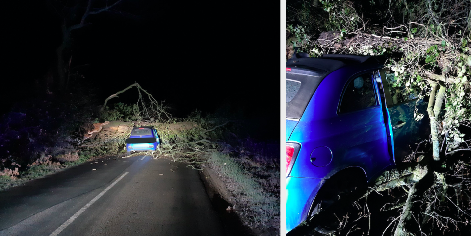 A huge oak tree fell on top of a driver's Fiat 500 in Suffolk. (SWNS)