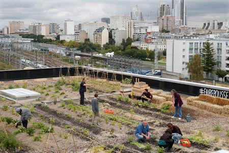 Post office employees pose on a 900 square meters farm garden on the rooftop of their postal sorting center, as part of a project by Facteur Graine (Seed Postman) association to transform a city rooftop as a vegetable garden to grow fruits, vegetables, aromatic and medicinal plants, with also chickens and bees in Paris, France, September 22, 2017. Picture taken September 22, 2017.  REUTERS/Charles Platiau