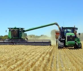 Growing quality wheat faster