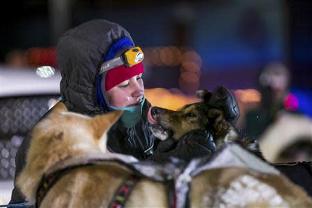 A handler cares for dogs on second place finisher Aliy Zirkle's team after they pull into the finish line during the Iditarod dog sled race in Nome, Alaska, March 11, 2014. REUTERS/Nathaniel Wilder