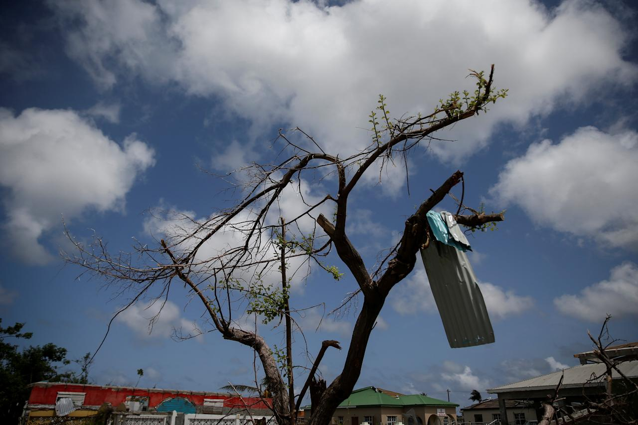 <p>Aluminum siding hangs from a tree at Codrington on the island of Barbuda just after a month after Hurricane Irma struck the Caribbean islands of Antigua and Barbuda, October 7, 2017. REUTERS/Shannon Stapleton </p>
