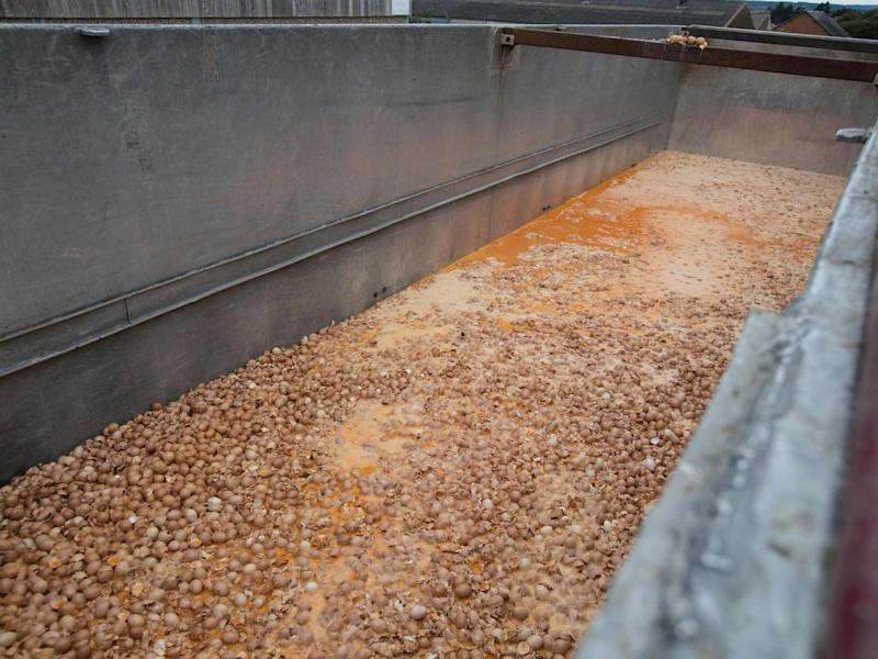 Eggs are destroyed at a chicken farm in Nadrin, Houffalize(AFP/Getty Images)