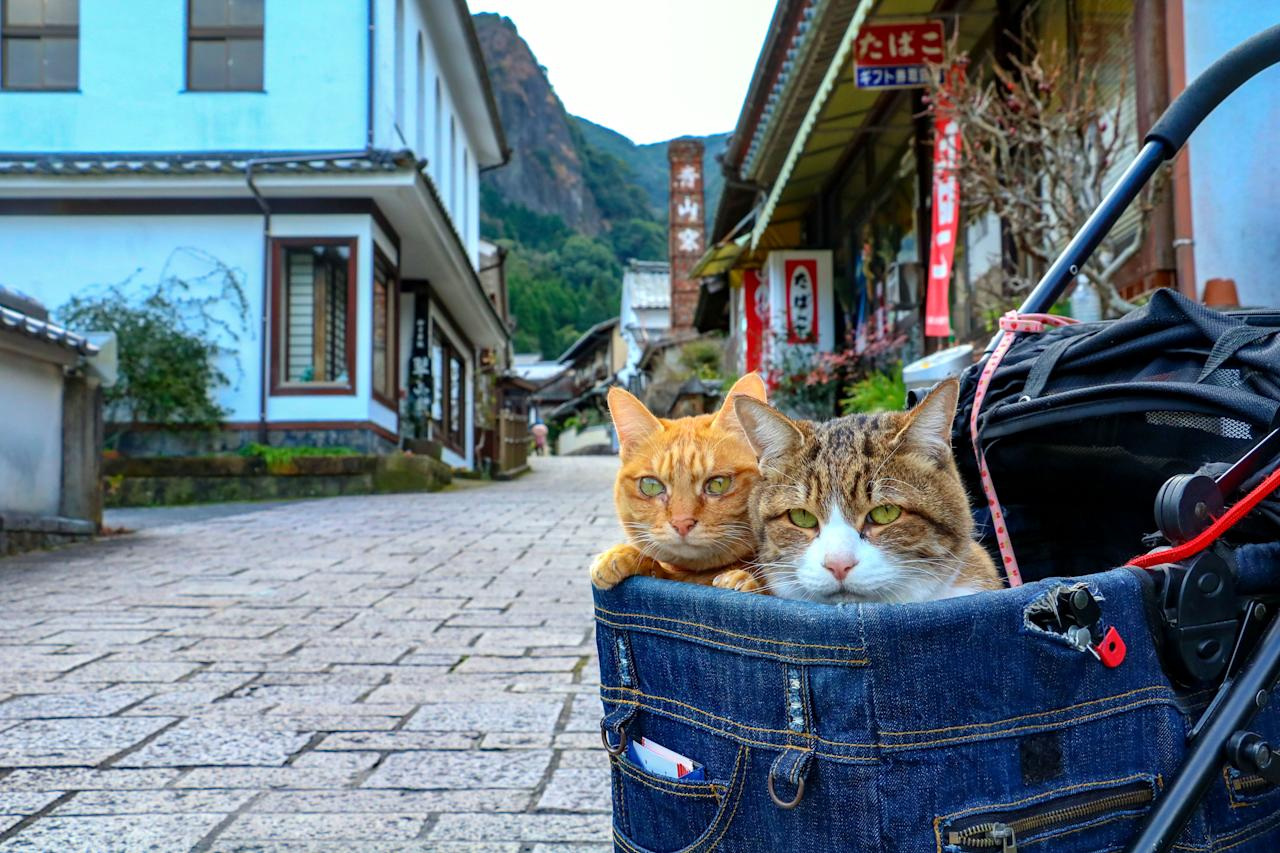 <p>Japanese tech executive Daisuke Nagasawa travels nationally and internationally with his cats, Fuku-Chan and Daikichi. (Photo: Daisuke Nagasawa/Caters News) </p>