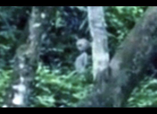 Video grab close up. What looks like an alien creature with visible head, neck, arms and body standing in the Brazilian rainforest in Manaus, Brazil. In this Amaz-alien footage, a lone unidentified being appears to stand in the jungle of Brazil -- even arching its back -- just feet away from a bright flashing blue light. In what some allege as proof that Earth is being visited by aliens from another planet, the video was obtained by paranormal writer Mike Cohen who says the video was taken by two British tourists visiting the Manaus region of the Amazon jungle.