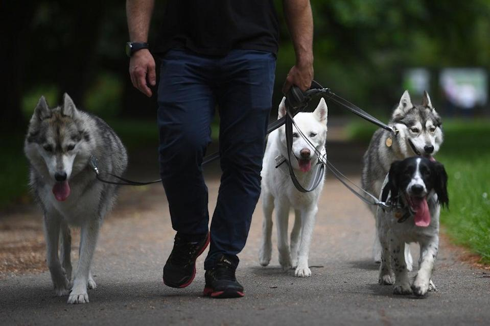 There are around 12 million pet dogs in the UK (Victoria Jones/PA) (PA Wire)