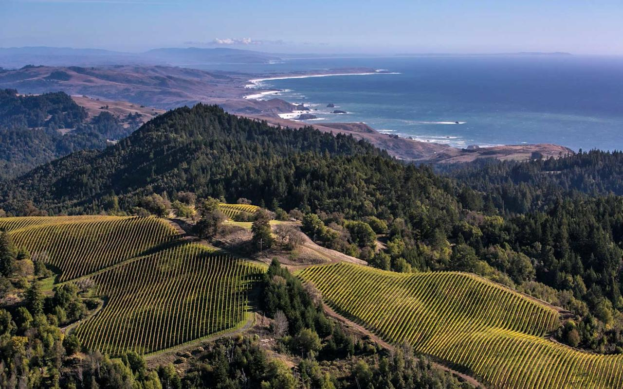 <p>While the rest of Sonoma soaks up the sun inland, Fort Ross Vineyard floats over the chill of coastal fog, affording a bird's-eye view of the property's vines, forests, meadows—and the spectacular Pacific Ocean in the distance.</p>