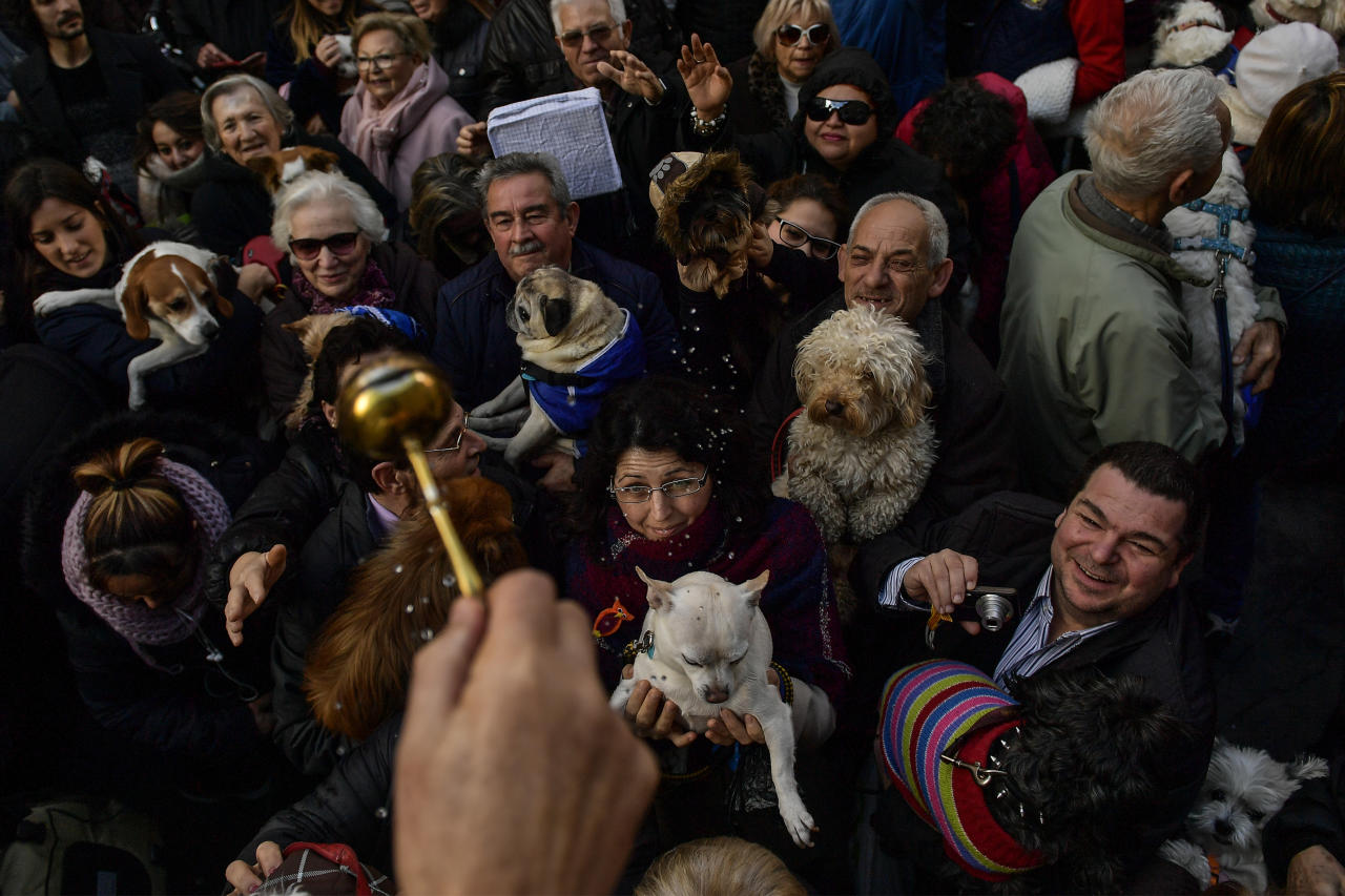 <p>The hand of Santiago Fulero, Major priest of the Saint Pablo church, blesses people with their pets outside of the church, during the feast of St. Anthony, Spain's patron saint of animals, in Zaragoza, northern Spain, Wednesday, Jan.17, 2018. (Photo: Alvaro Barrientos/AP) </p>