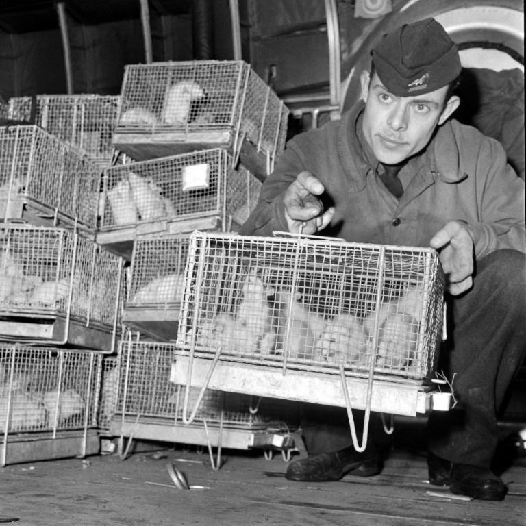 Guinea pigs were exposed to the radiation of the nuclear test in 1960