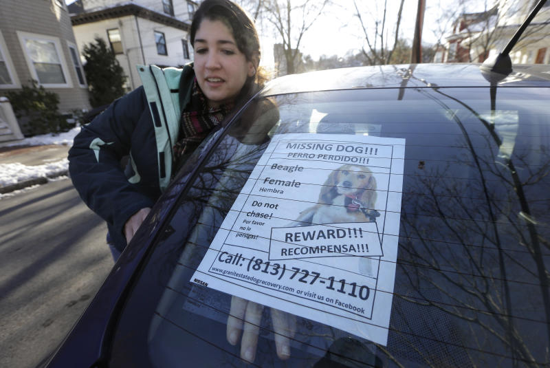 Dog groomer Casey Mabardy, of Lexington, Mass., places a poster for a missing dog in the rear window of her car, in Brookline, Mass., Thursday, Jan. 3, 2013. The missing dog, a beagle named Tessa, that belongs to author Dennis Lehane, went missing on Christmas Eve 2012. (AP Photo/Steven Senne)