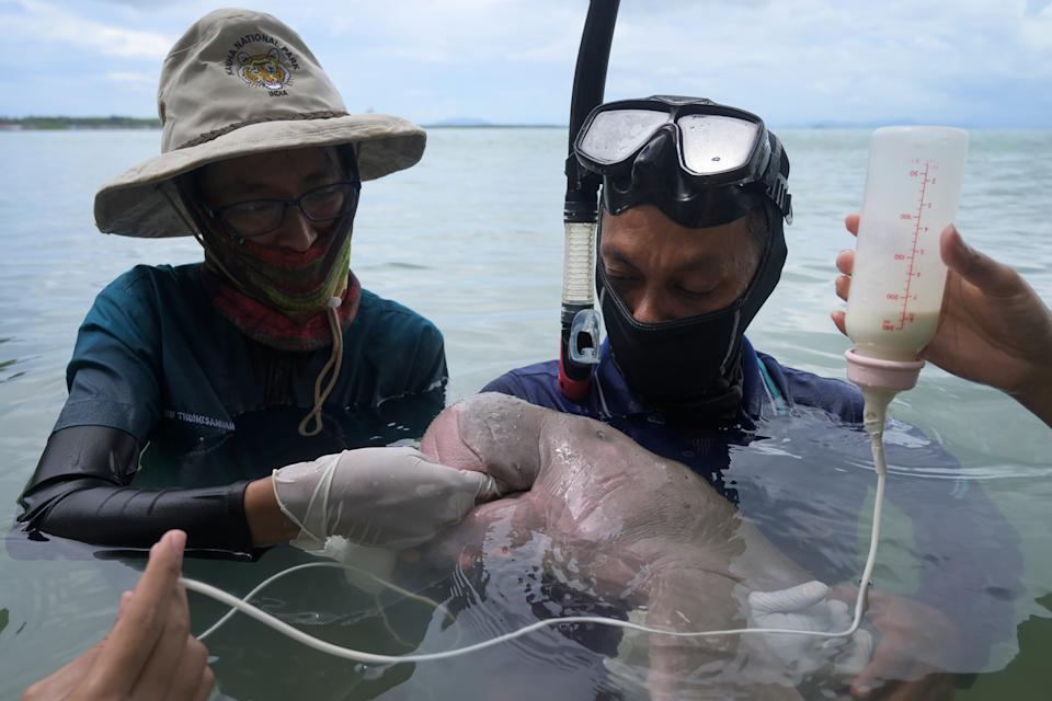 Mariam the dugong as she is cared for by park officials and veterinarians from the Phuket Marine Biological Centre on Libong island, Trang province in southern Thailand in May. She died on Saturday from plastic in her stomach.