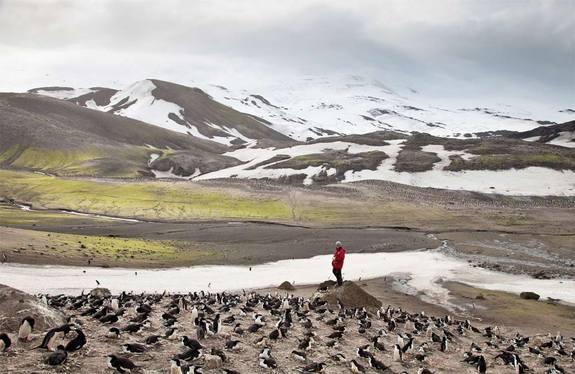 Antarctic Site Inventory researcher Steven Forrest counting penguins at Baily Head, Deception Island.