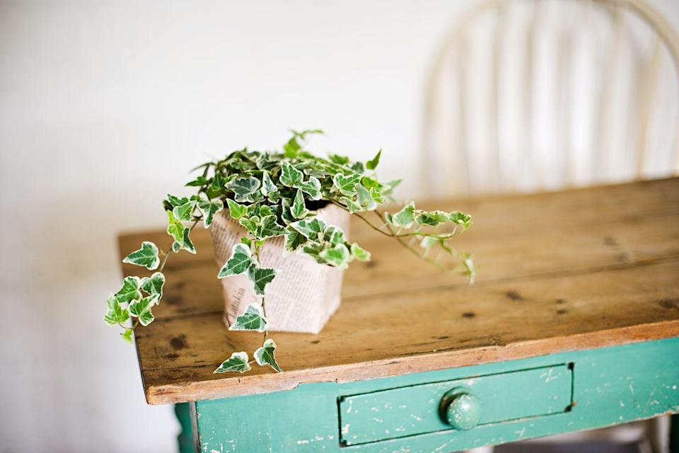 "<p>Ivy are known for being easy-going, fast growers. They love moisture, are good air-purifiers and are great for hanging. Place on a high shelf or hang from a ceiling hook to add visual interest. </p><p><a class=""link rapid-noclick-resp"" href=""https://go.redirectingat.com?id=127X1599956&url=https%3A%2F%2Fwww.crocus.co.uk%2Fplants%2F_%2Fhedera-helix%2Fclassid.2000011685%2F&sref=https%3A%2F%2Fwww.countryliving.com%2Fuk%2Fhomes-interiors%2Finteriors%2Fg33454786%2Fbathroom-plants%2F"" rel=""nofollow noopener"" target=""_blank"" data-ylk=""slk:BUY NOW"">BUY NOW</a></p>"