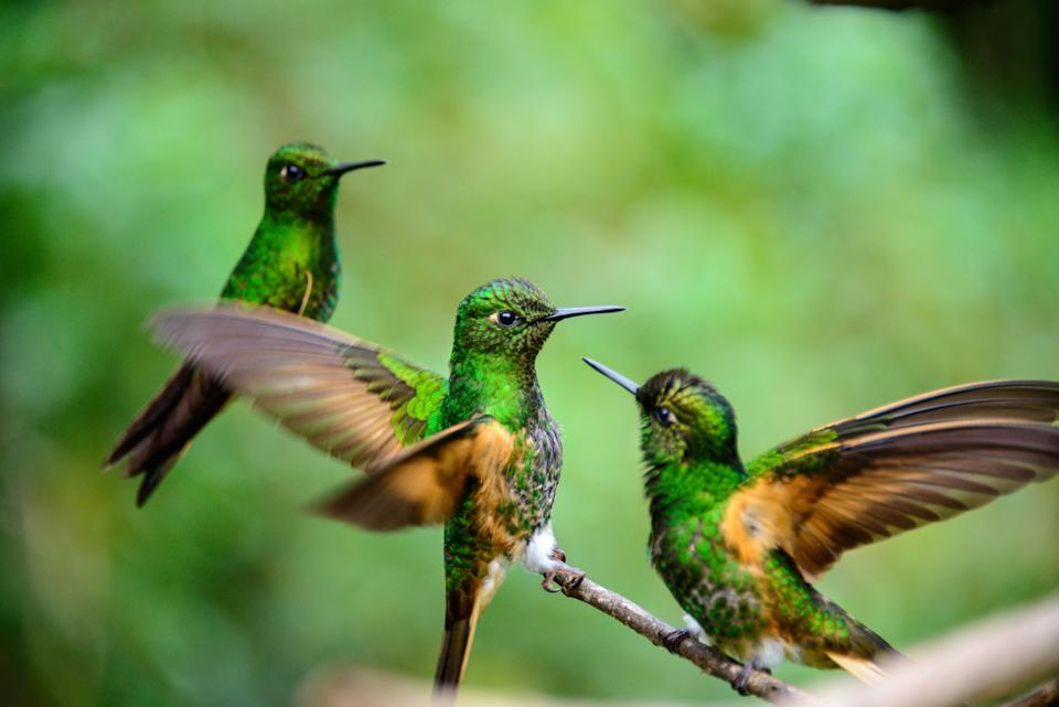Few countries have as many species of bird - getty