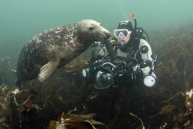 <p>Caroline Robertson-Brown, 44, was leading a group of underwater photographers around the Farne Islands, off the coast of Northumberland, England, to photograph the gray seal population. (Photo: Frogfish Photography/Caters News) </p>