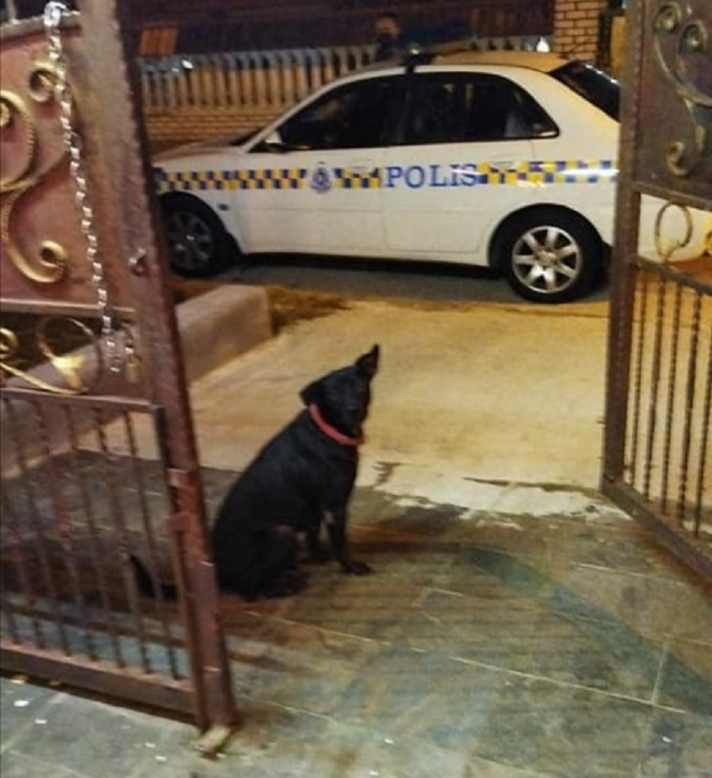 The dog's barking saved a Johor Baru woman from being raped. ― Picture via Facebook/O Tak Tan