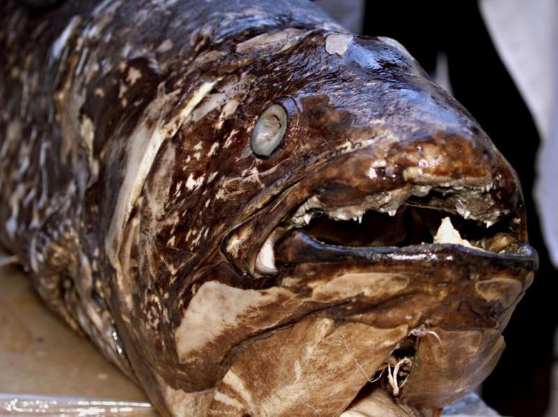 FILE PHOTO: SCIENTIST DISPLAY FISH COELACANTH THOUGHT EXTINCT WITH THE DINOSAURS.
