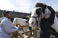 Manuela Jimenez, 15, right, and Attiyah Lamptey-Muhammed prepare Joe for a riding lesson at Ebony Horse Club in Brixton, south London, Sunday, April 18, 2021. In the midst of south London's hustle and bustle, only a 10-minute walk from a subway station, is a school where children are encouraged to horse around. The Ebony Horse Club provides 140 rides per week to children in the local community offering them the opportunity to learn important life skills along with horseback riding. (AP Photo/Kirsty Wigglesworth)
