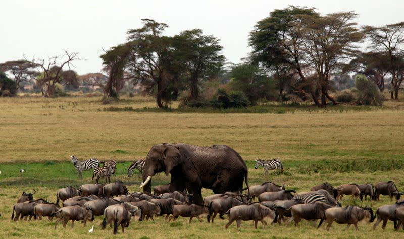 Pandemic costs Africa travel, tourism almost $55 billion