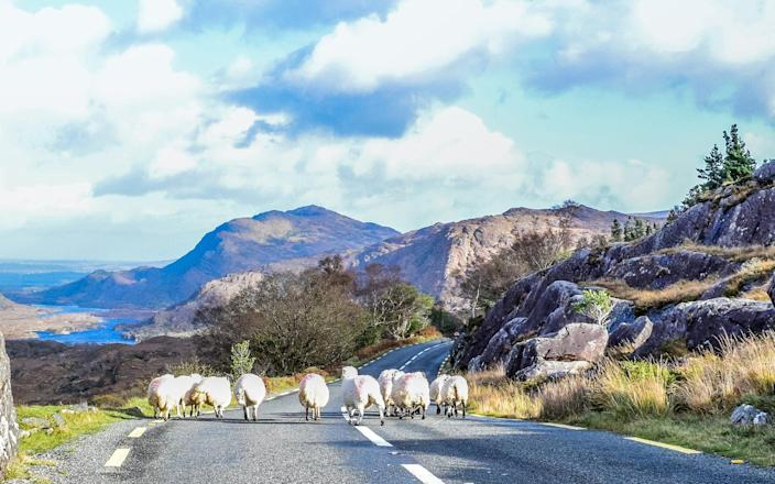 Ring of Kerry, Ireland - Getty