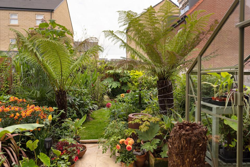 The garden is now a tropical oasis. (Caters)