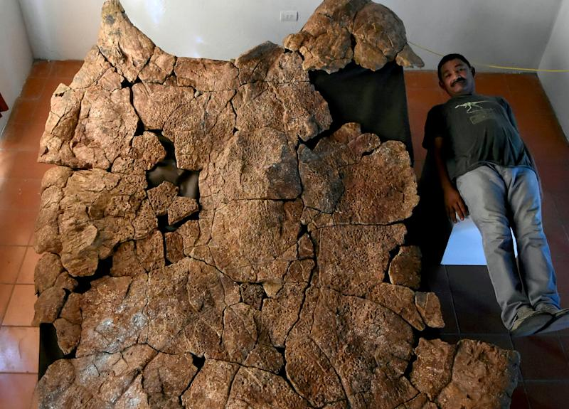 Venezuelan Palaeontologist Rodolfo Sanchez next to a male carapace of the giant turtle Stupendemys geographicus, from Urumaco, Venezuela, found in 8 million years old deposits (Picture: SWNS)