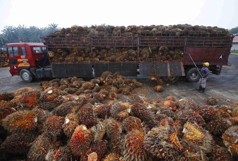 The Malaysian Estate Owners Association pointed out the unfair comparisons made in the article where it was biased against the palm oil industry while leaving out the impact of rival product in the soy industry which the West favours. — Reuters pic