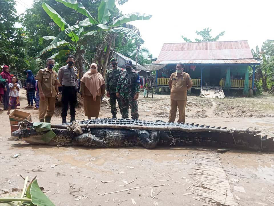 Villagers with the 680kg crocodile after it was caught. Source: Viral Press/Australscope