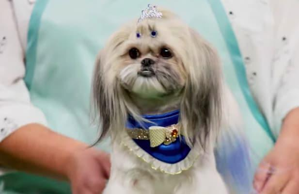 Watch the Barking-Mad Trailer for HBO Max's Dog-Grooming Competition 'Haute Dog' (Video)