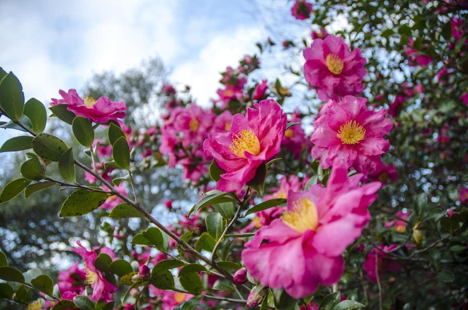 """<p>Averaging about 15 feet tall and wide, many ornamental or dwarf tree varieties can handle tiny spaces. Crowd-pleasers like dogwoods, camellias, crepe myrtle, and crabapples offer both flowers and foliage too. <br></p><p><strong>RELATED: </strong><a href=""""https://www.goodhousekeeping.com/home/gardening/g26426369/trees-for-small-yards/"""" rel=""""nofollow noopener"""" target=""""_blank"""" data-ylk=""""slk:The 9 Best Trees for Small Yards"""" class=""""link rapid-noclick-resp"""">The 9 Best Trees for Small Yards</a></p>"""