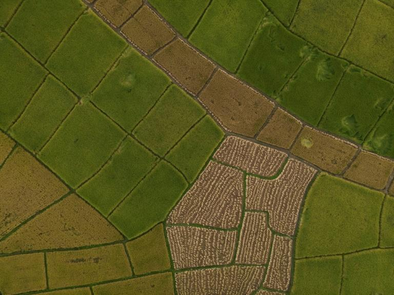 With SRI, paddy fields are not permanently flooded, which reduces methane emissions by 60 percent, according to Tristan Lecomte, founder of Pur Projet, a French company supporting the technique