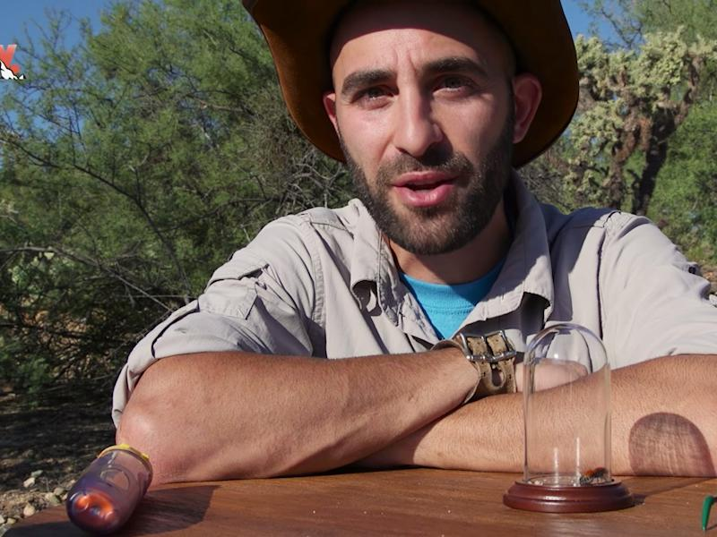 coyote peterson brave wildnerness youtube