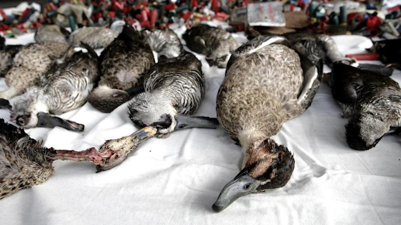 SA activists rally against duck hunting