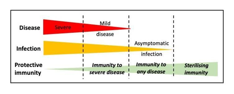 A graph showing the inverse relationship between coronavirus infection severity and protective immunity.