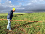 Tim Black checks on native grasses growing on his farm in Muleshoe, Tex., on Tuesday, May 18, 2021. Black planted the grasses to help keep soil from blowing and to provide grazing for his cattle. More farmers are planting native grasses as the Ogallala aquifer dries up, making irrigation of traditional crops more difficult. (AP Photo/Tammy Webber)
