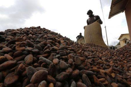 Men pour out cocoa beans to dry in Niable