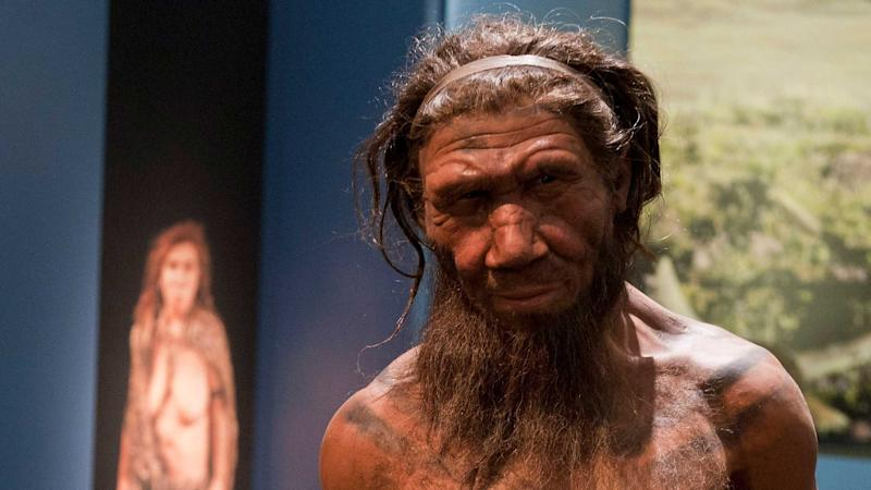 Inbreeding and small populations 'could have led to Neanderthal extinction'