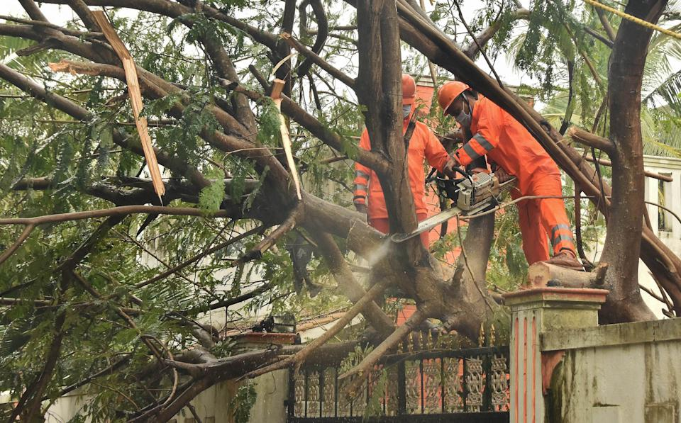 Workers remove the uprooted trees at a storm-affected area, in the aftermath of cyclone Nivar yesterday night, in Puducherry