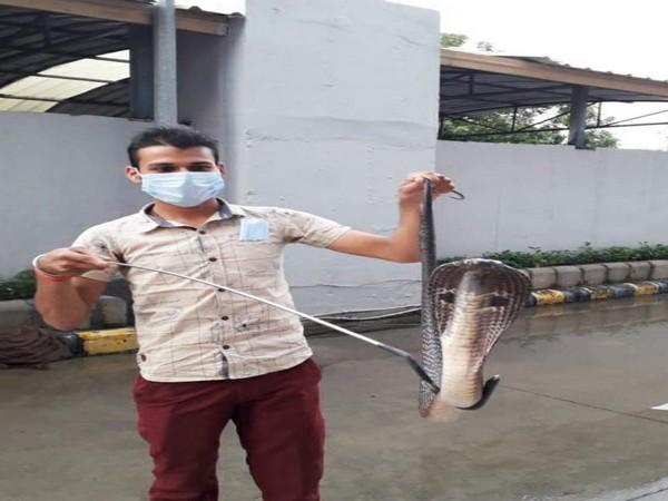 A visual from the spot where the Cobra was rescued in Delhi.