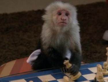 '30 Rock': Was Last Night's Monkey a Dig at 'Animal Practice'?