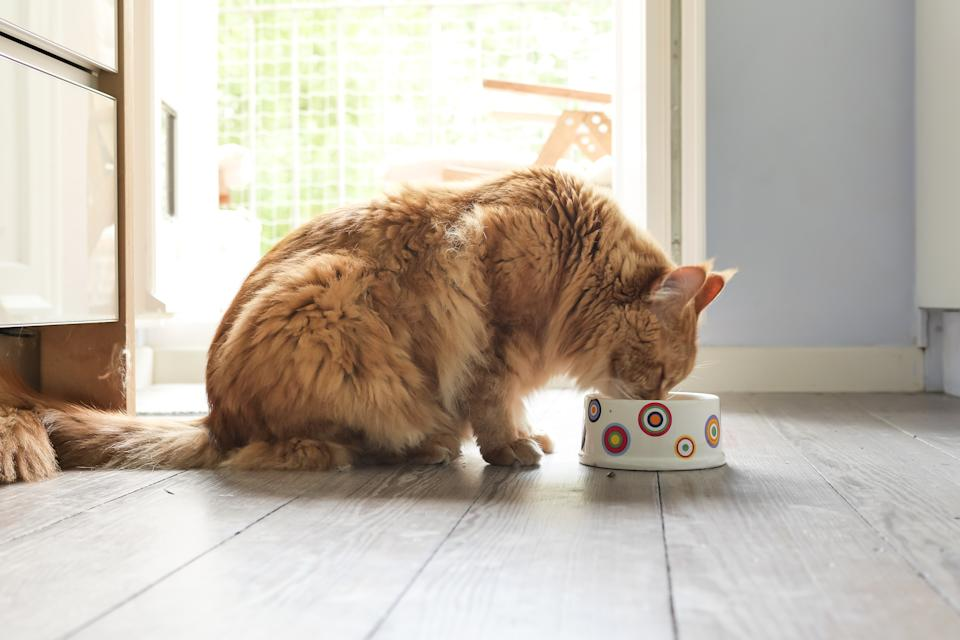 Make sure your kitty has plenty of food to fill their bowl. (Photo: Getty)