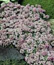 """<p><a href=""""https://www.amazon.com/Sweet-Alyssum-Carpet-Wildflower-Seeds/dp/B077MRHG24/ref=sr_1_1_sspa?keywords=Sweet+Alyssum&qid=1563898740&s=lawn-garden&sr=1-1-spons&psc=1&tag=syn-yahoo-20&ascsubtag=%5Bartid%7C10069.g.28460765%5Bsrc%7Cyahoo-us"""" rel=""""nofollow noopener"""" target=""""_blank"""" data-ylk=""""slk:Sweet Alyssum"""" class=""""link rapid-noclick-resp"""">Sweet Alyssum </a>is in the mustard family but known for their lovely scent and delicate flowers. They make wonderful ground cover as they only reach 3 to 6 inches tall and are hardy enough to withstand most climates outside of winter.</p><p><strong>When it blooms: </strong>June through October</p><p><strong>Where to plant:</strong> Full sun to partial shade</p><p><strong>When to plant:</strong> Spring </p><p><strong>USDA Hardiness Zones:</strong> 7 to 11</p>"""